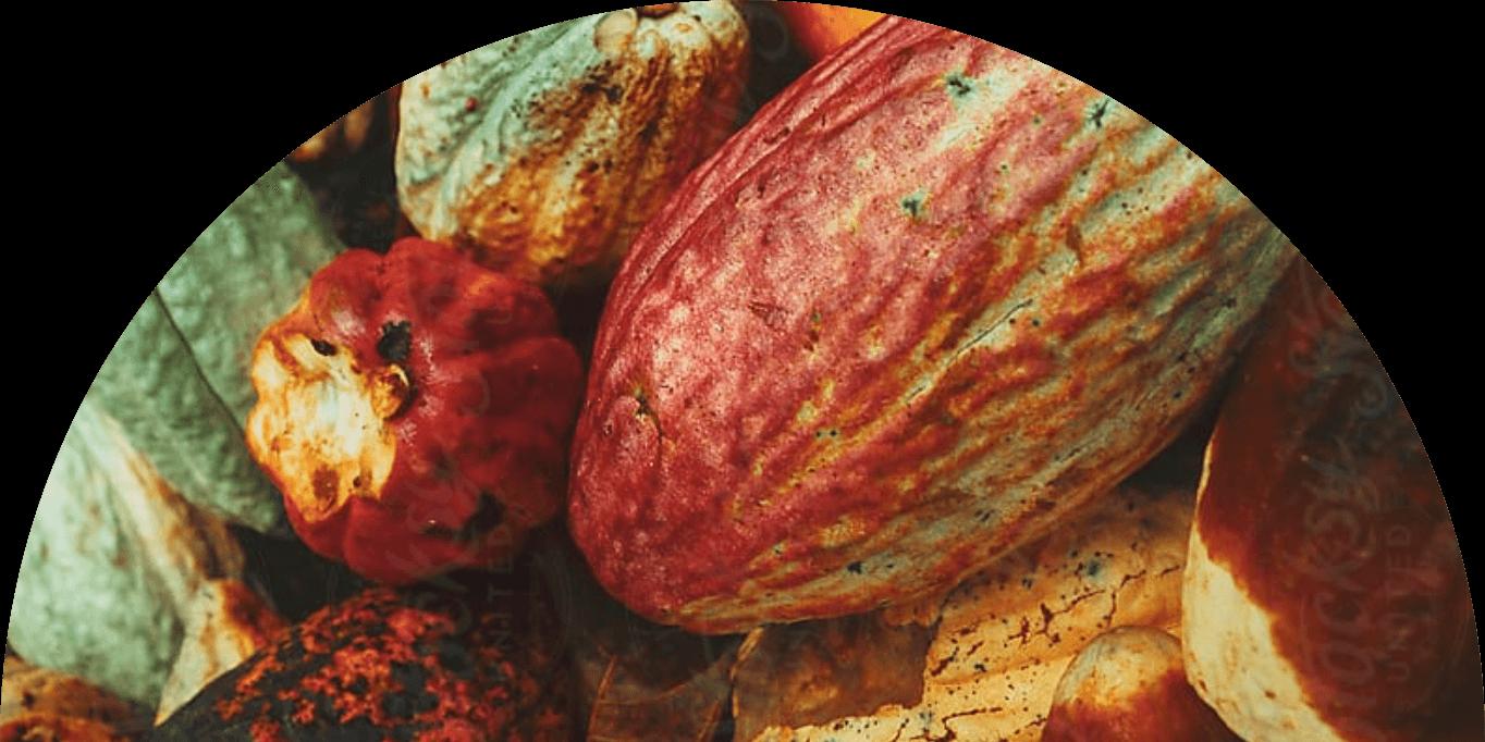 farmforce cocoa